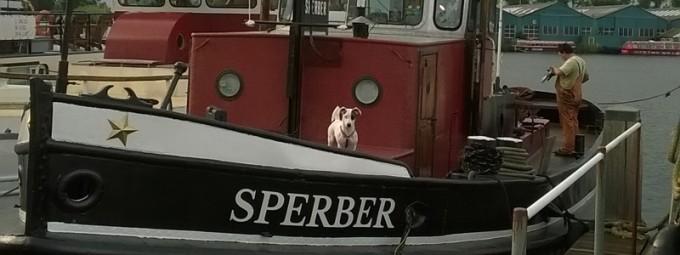 Sperber